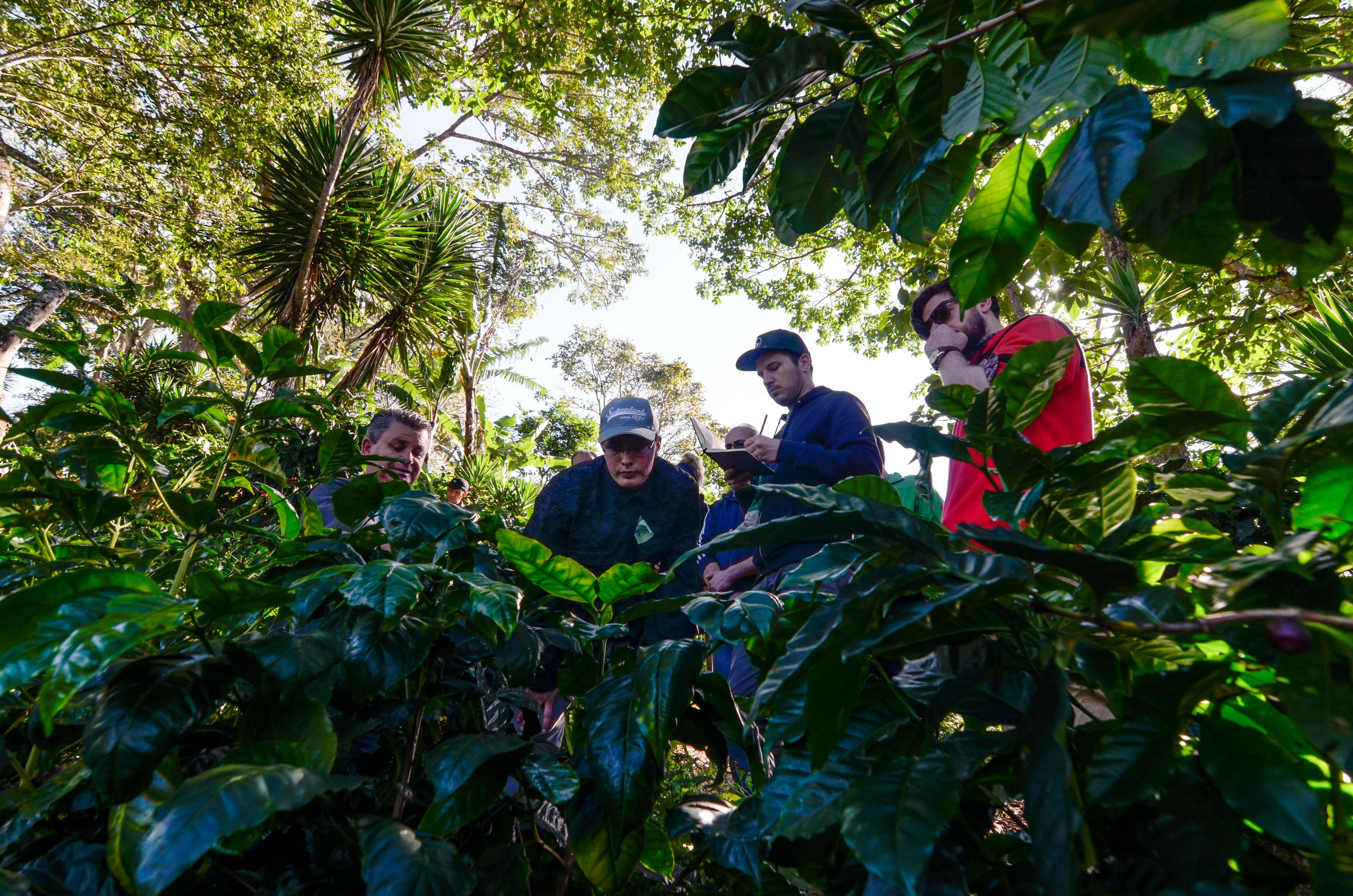 hands-on Coffee Farm Training